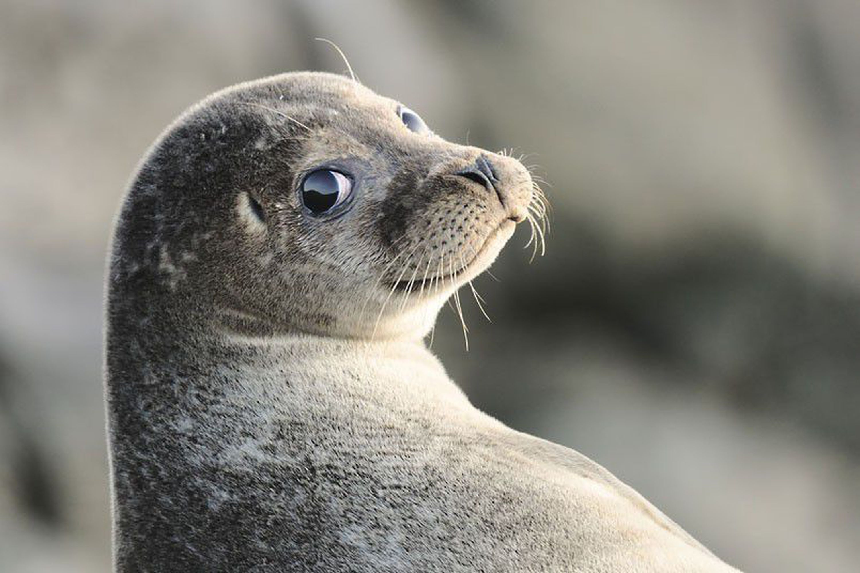 Картинки про тюленей смешные